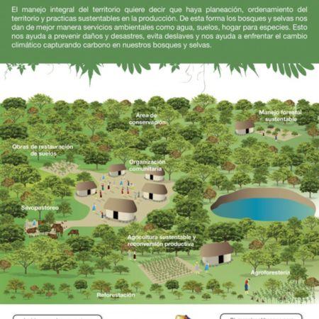 Aprovechamiento del bosque como estrategia de conservación