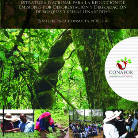 Estrategia Nacional para la Reducción de Emisiones por Deforestación y Degradación de bosques y selvas (Enaredd+): Síntesis para consulta pública