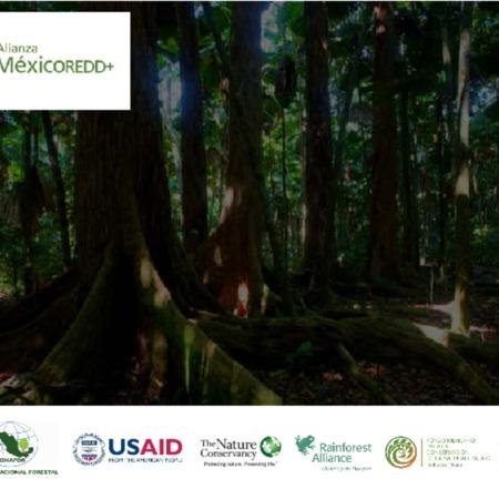 Principales conclusiones sobre el estudio de percepción sobre REDD+ en México