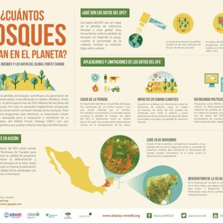 ¿Cuántos bosques quedan en el planeta?: la pérdida de bosques y los datos del Global Forest Change