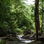 Los bosques en Centroamérica son una importante fuente energética