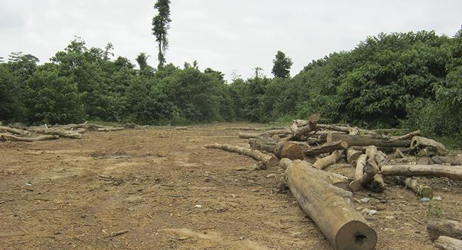 Teleconferencia sobre experiencias compartidas en degradación forestal