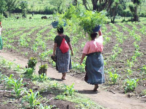 Convocatoria de propuestas: Desarrollo de un sistema de información sobre cambio climático para las estrategias de adaptación en Guatemala