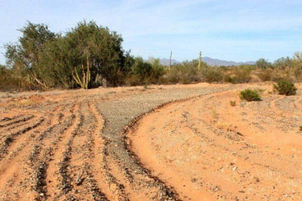 Invitan a revisar el informe de evaluación temática sobre degradación y restauración de tierras