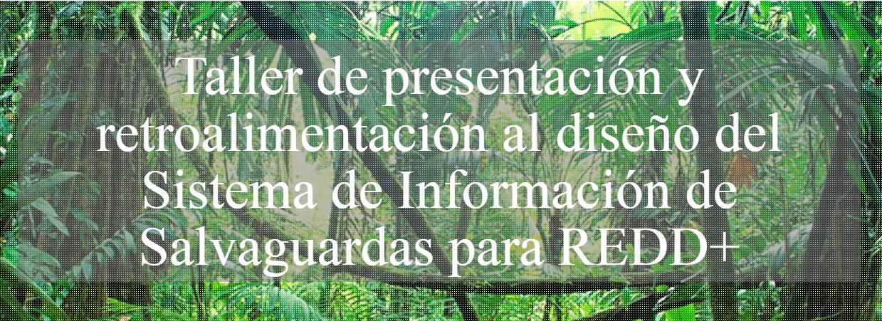 TALLER DE PRESENTACIÓN Y RETROALIMENTACIÓN AL DISEÑO DEL SISTEMA DE INFORMACIÓN DE SALVAGUARDAS (SIS) PARA REDD+