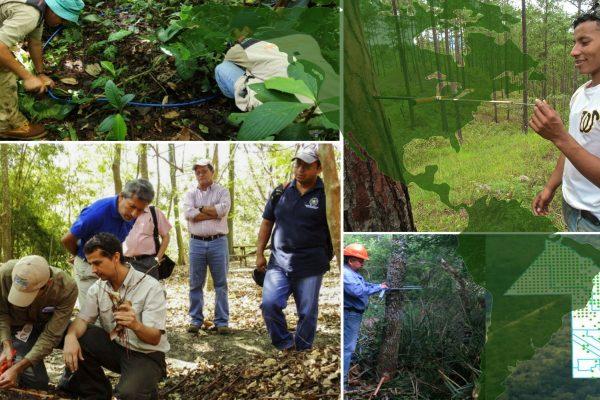 II Reunión de expertos sobre el proceso de armonización de los Inventarios Forestales Nacionales en Amazonía y Mesoamérica