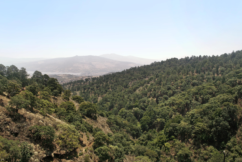 Taller: Modelado de dinámica de carbono en ecosistemas forestales de México para apoyar la toma de decisiones en el manejo de los recursos forestales basados en escenarios de mitigación