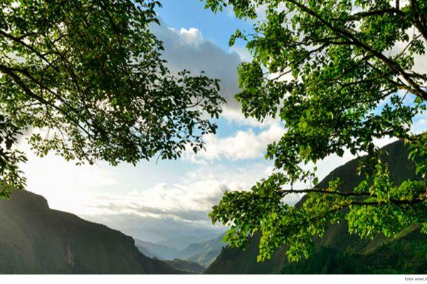 Videoconferencia: Arreglos institucionales, sostenibilidad e interoperabilidad de los Sistemas Nacionales de Monitoreo Forestal