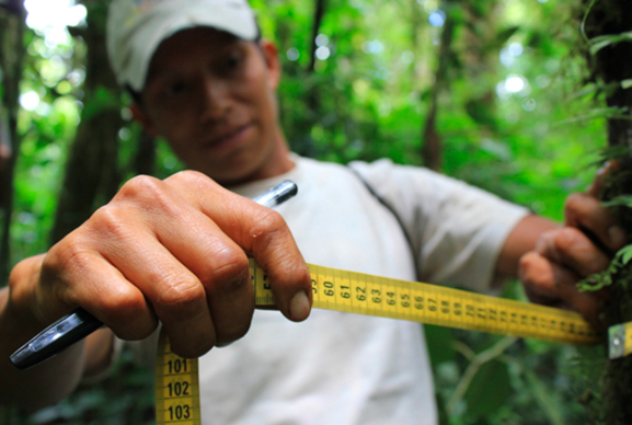 Videoconferencia sobre Gestión Integrada de dato forestales bajo el enfoque de Business Intelligence (BI)